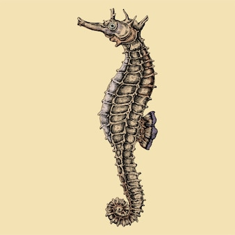 Hand drawn seahorse isolated