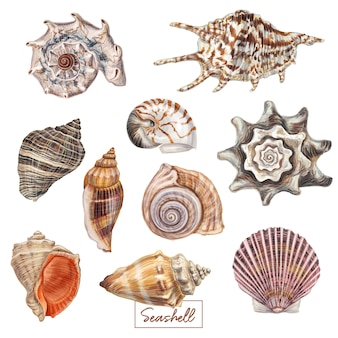 Hand drawn seashell set