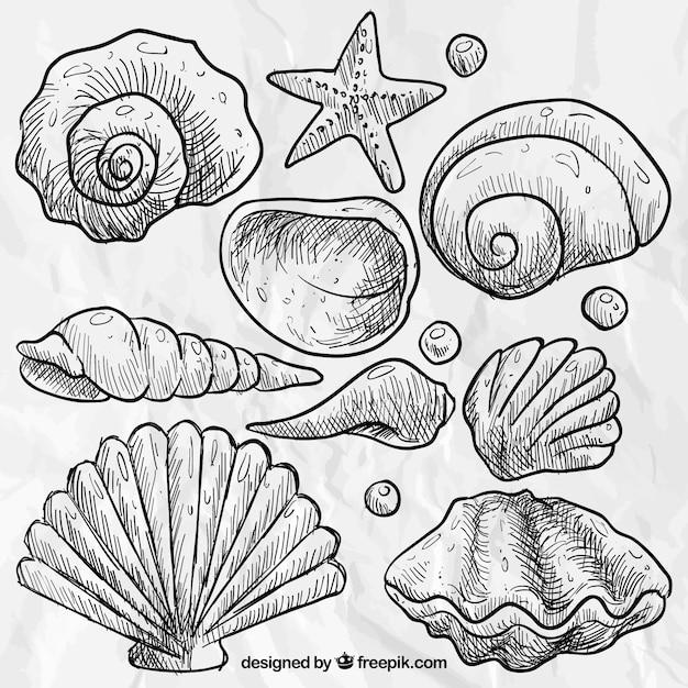 Great Hand Drawn Seashells