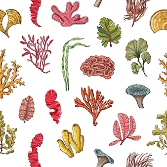 Hand drawn seaweed elements pattern or illustration