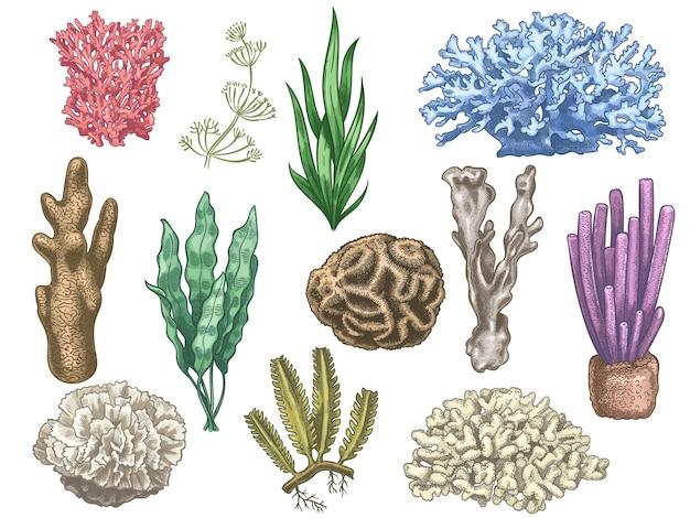 손으로 그린 해초와 산호. 바다 암초와 수족관 수중 식물. 다시마, 조류 해양 잡초 빈티지 색상 스타일 격리 벡터 집합입니다. 그림 산호초 바다, 해초 해양