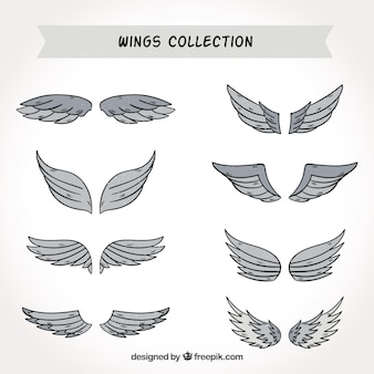Hand-drawn selection of gray wings