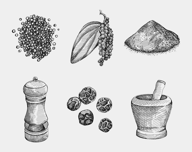 Hand-drawn set of black pepper. handful of pepper, peppercorns, pepper powder, black pepper branch with a leaf, black pepper grinder, bowl for spice grinding. spice and seasoning