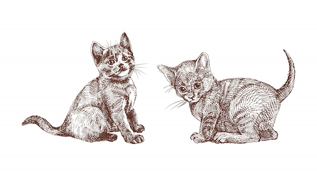 Hand drawn set of british shorthair kittens, engraving vintage style