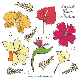 Hand drawn set of colorful tropical flowers