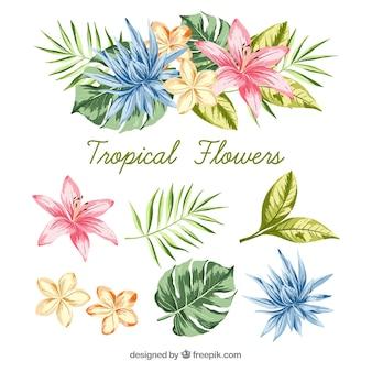 Insieme disegnato a mano di fiori tropicali colorati