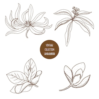 Hand drawn set of cosmetic plants