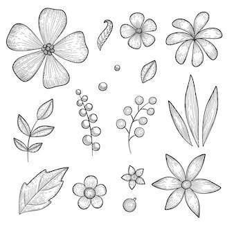 Hand drawn set of garden botanical flower