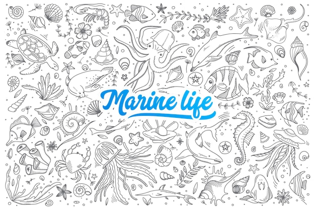Hand drawn set of marine life doodles with blue lettering