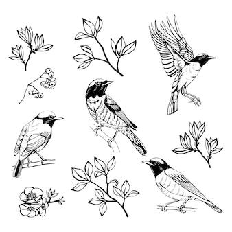 鳥と花の手描きのセット。レッドスタート。外形図。