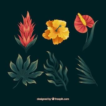 Рисованной набор красочных тропических цветов