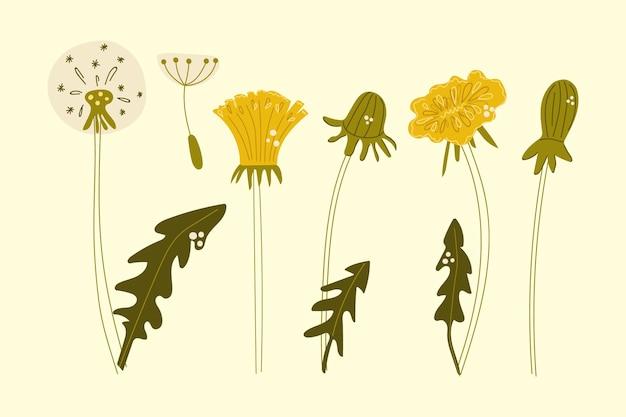민들레 꽃의 손으로 그린 세트 플랫