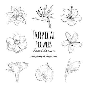 熱帯の花の手描きセット