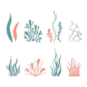 손으로 그린 열대 해초 바다 생물 해양 식물의 벡터 일러스트 세트
