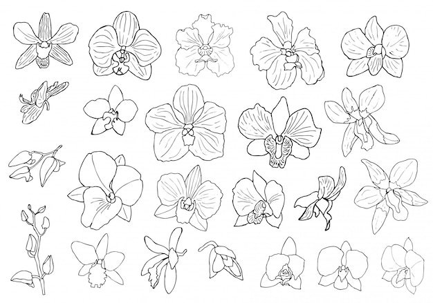 Hand drawn set of orchid flowers. Premium Vector