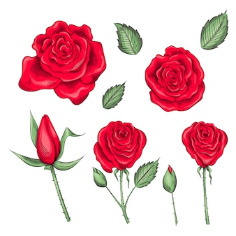 Hand drawn set of roses, rose buds and leaves