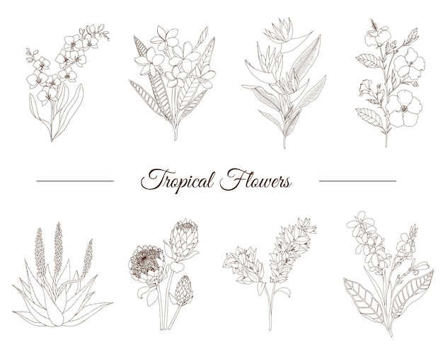 Hand drawn set of tropical flowers