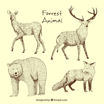 Hand-drawn set of wild animals