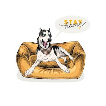 手描きのシベリアンハスキー犬は、モダンなペット用家具に横たわっています。