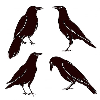 Hand drawn silhouette of crow