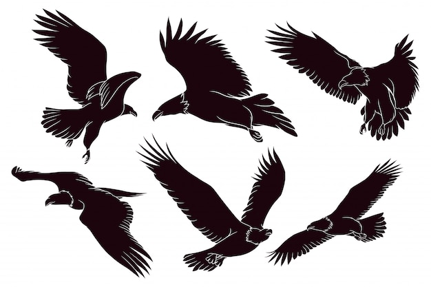 Hand drawn silhouette of eagle