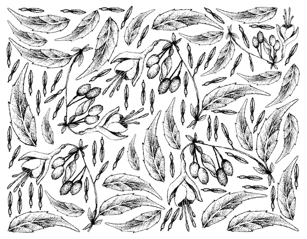 Hand drawn skecth background of brinco de princesa frutis