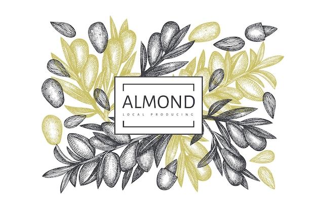 Hand drawn sketch almond design.  organic food illustration.