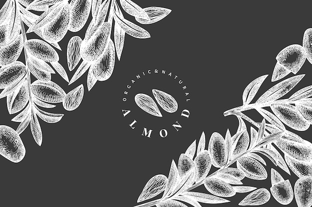손으로 그린 된 스케치 아몬드 디자인 서식 파일입니다. 분필 보드에 유기농 식품 그림입니다.