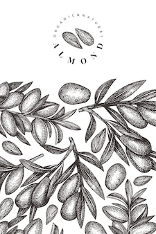 손으로 그린 된 스케치 아몬드 디자인 서식 파일입니다. 유기농 식품 벡터 일러스트입니다. 빈티지 너트 그림입니다. 새겨진 스타일 식물 배경.