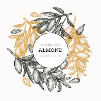 Hand drawn sketch almond  . organic food  illustration. retro nut illustration. engraved style botanical background.