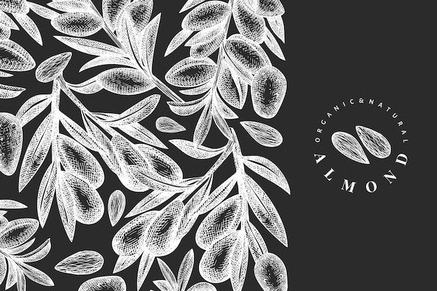Ручной обращается эскиз миндального шаблона. иллюстрация органических продуктов питания на доске мелом. винтажная иллюстрация ореха. гравированный стиль ботанический фон.