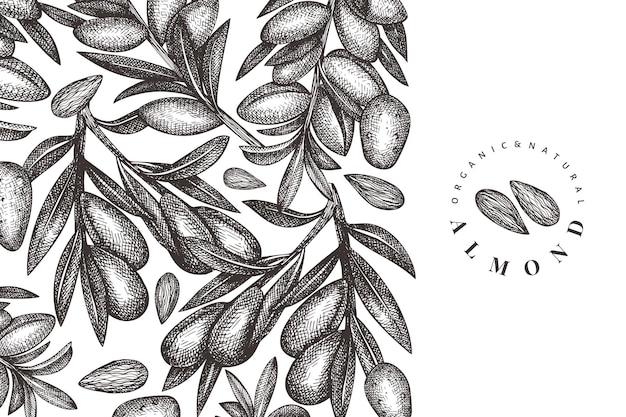 손으로 그린 된 스케치 아몬드 템플릿입니다. 유기농 식품 그림입니다. 빈티지 너트 그림입니다. 새겨진 스타일 식물 배경.