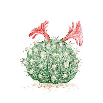 Hand drawn sketch of borzicactus cactus plant