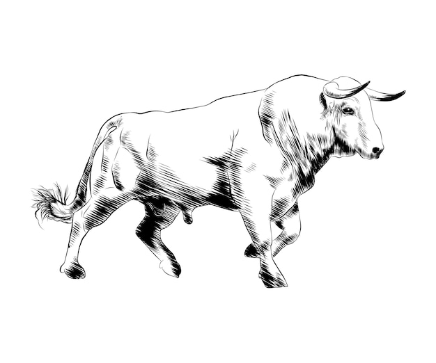 Hand drawn sketch of bull in black