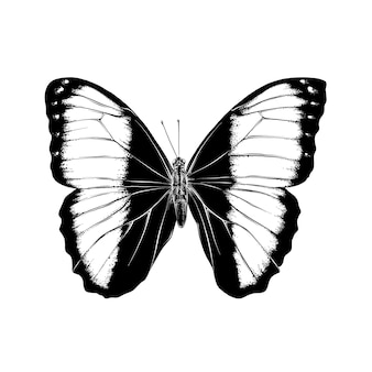 Hand drawn sketch of butterfly in black color. isolated .