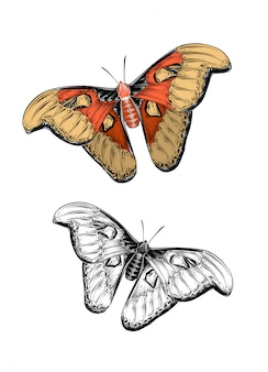 Hand drawn sketch of butterfly in color. isolated