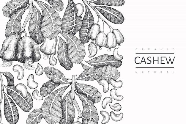 手描きのスケッチカシューデザインテンプレート。白い背景の上の有機食品ベクトルイラスト。ビンテージナットの図。刻まれたスタイルの植物の背景。