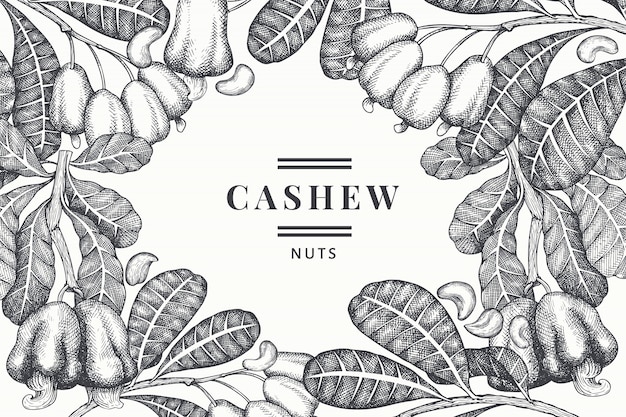 Hand drawn sketch cashew design template. organic food vector illustration on white background. vintage nut illustration. engraved style botanical background.