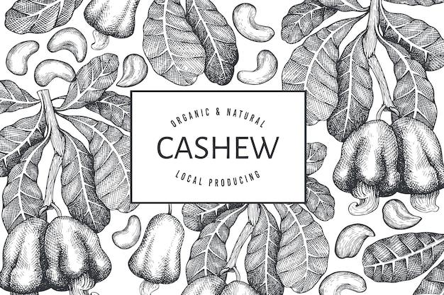 Hand drawn sketch cashew  template. organic food  illustration on white background. vintage nut illustration. engraved style botanical background.