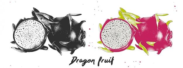 Hand drawn sketch of dragon fruit