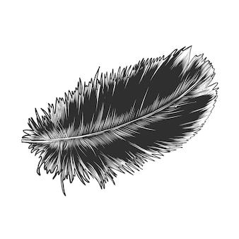 Hand drawn sketch of feather in monochrome