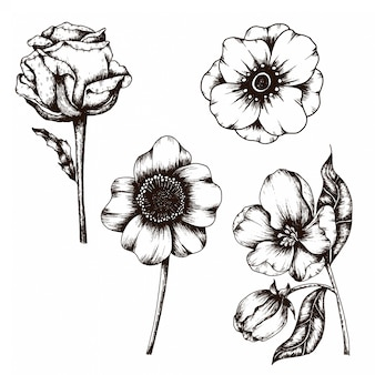 Hand drawn sketch of flower vintage style collection
