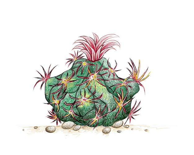 Hand drawn sketch of glandulicactus uncinatus cactus plant