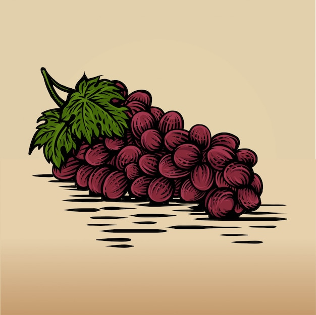 Hand drawn sketch of grape in colorful. detailed vegetarian food drawing.