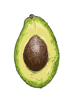 Hand drawn sketch of half avocado in color. isolated .