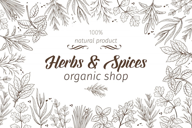 Hand drawn sketch herbs and spices