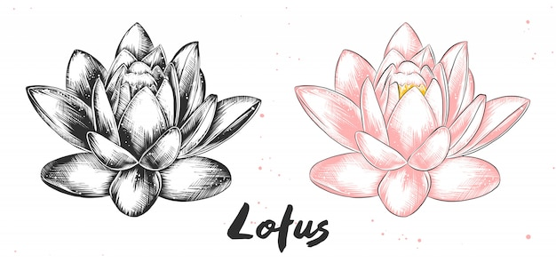 Hand drawn sketch of lotus flower