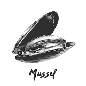 Hand drawn sketch of mussel in monochrome