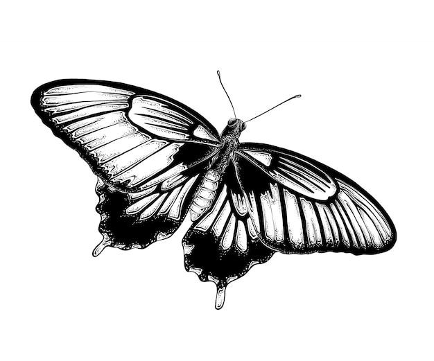 黒い色の蝶の手描きのスケッチ。白で隔離
