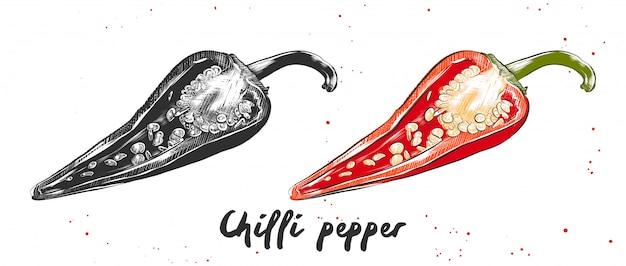 Ручной обращается эскиз перца чили